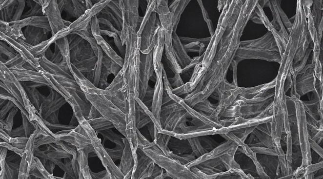 Cellulose fibers were found to help nanobatteries keep their structure