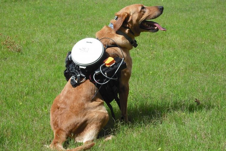 Fetch, Boy! Canine Remote Control System Invented